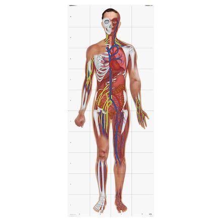 Human Body Bee-Bot Mat. IT10165